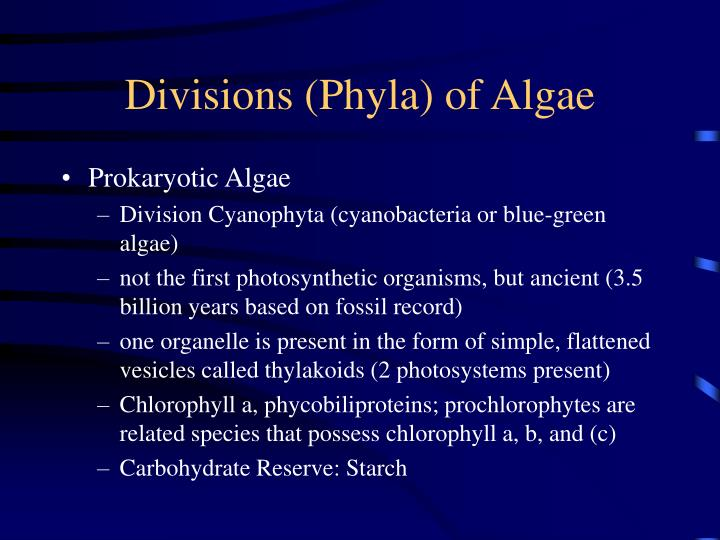 Divisions phyla of algae