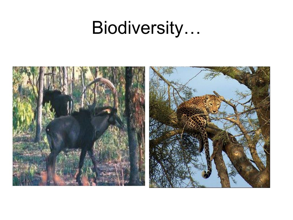 Biodiversity…