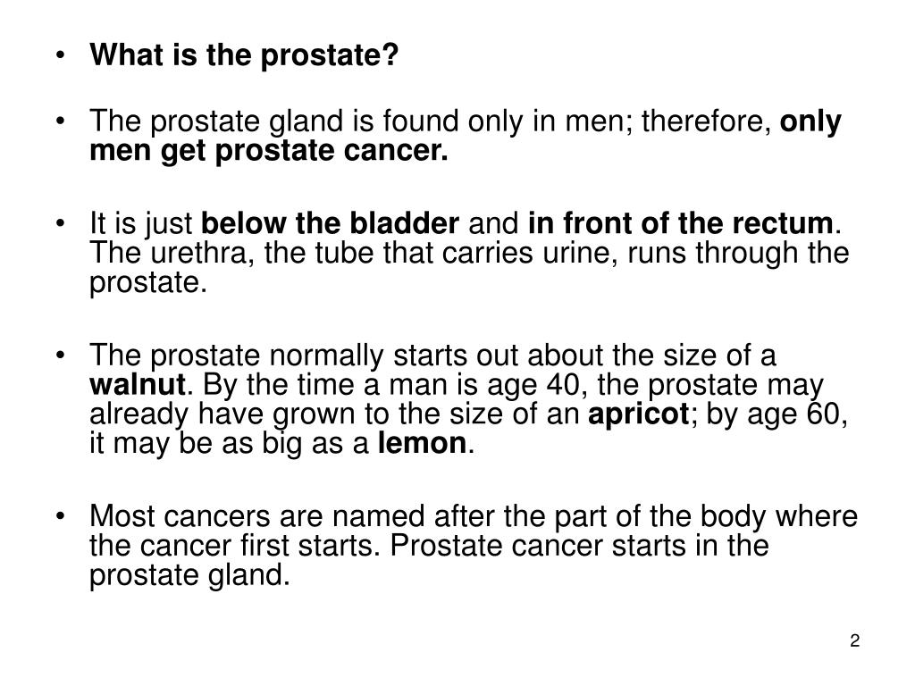 What is the prostate?