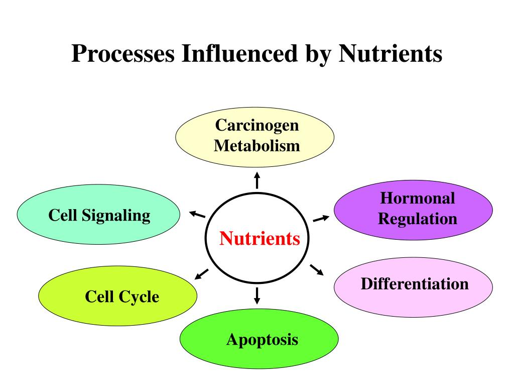 Processes Influenced by Nutrients