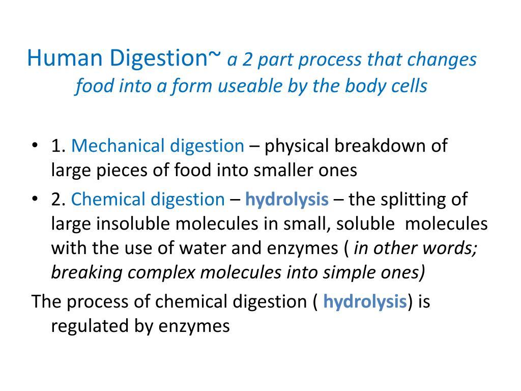 Human Digestion~