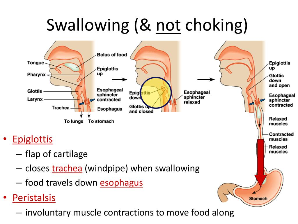 Swallowing (&