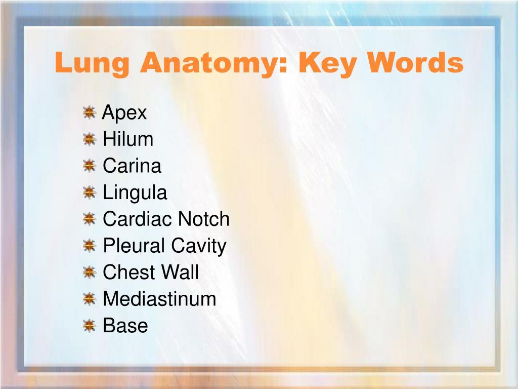 Lung Anatomy: Key Words