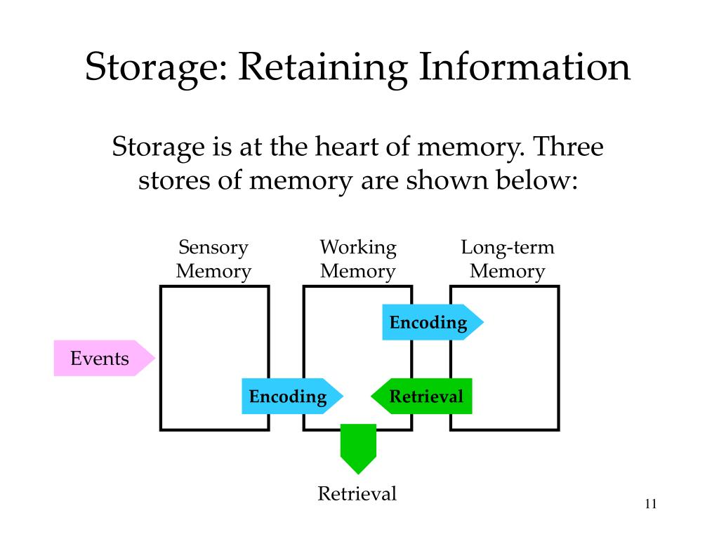 Storage: Retaining Information