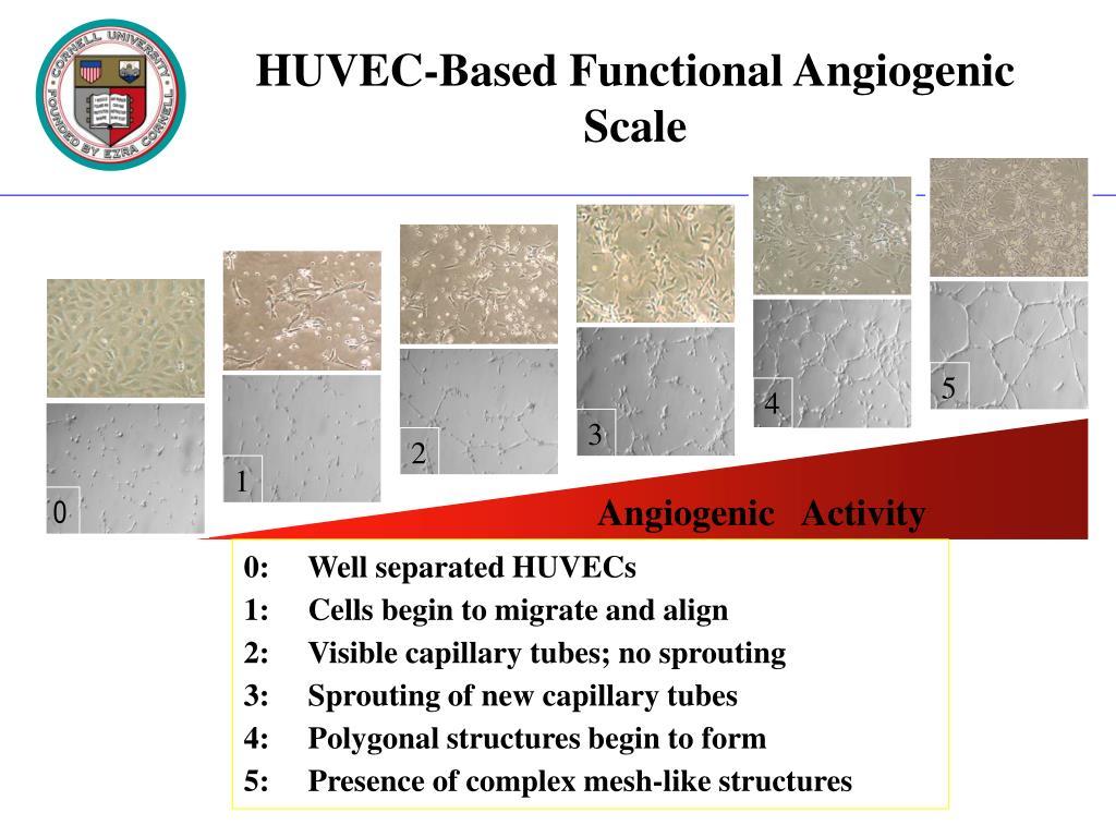 Angiogenic   Activity