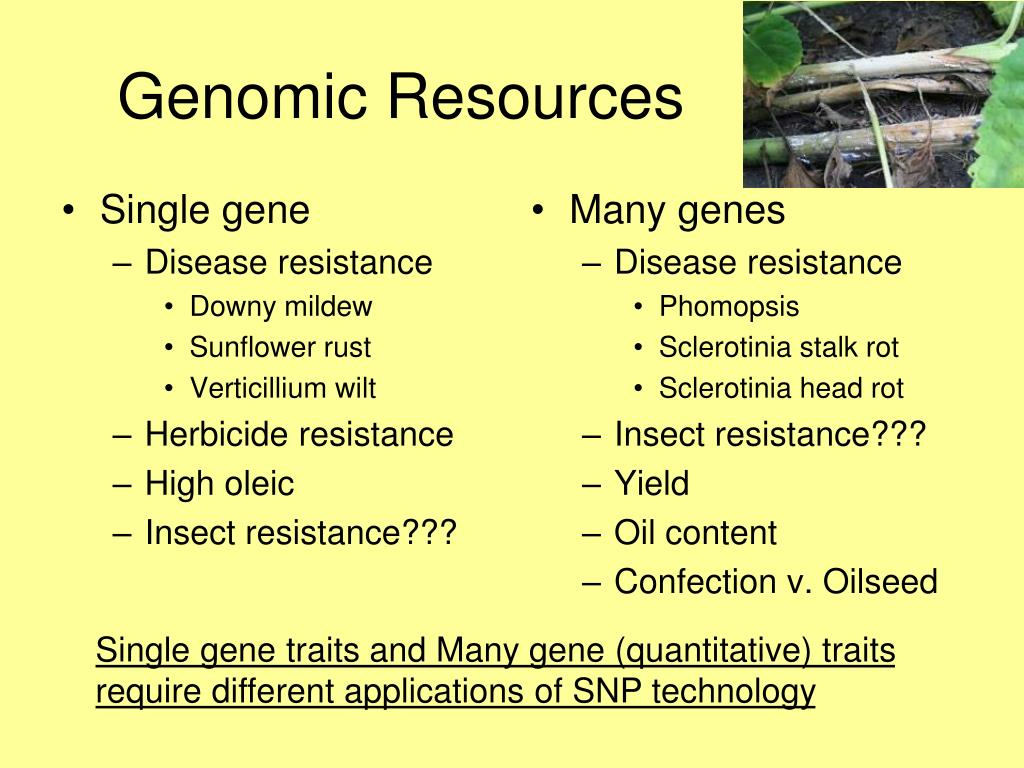 Single gene