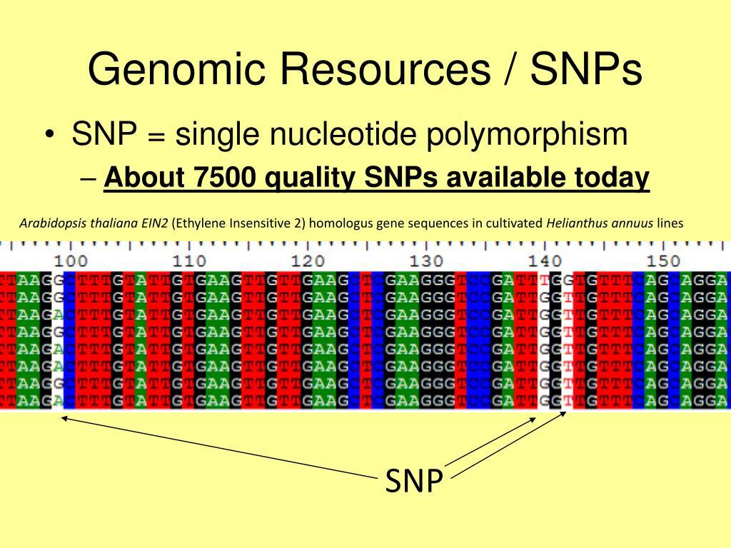 Genomic Resources / SNPs
