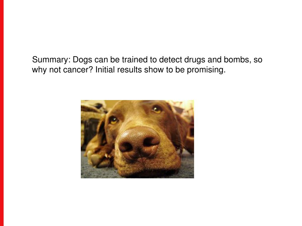 Summary: Dogs can be trained to detect drugs and bombs, so why not cancer? Initial results show to be promising.