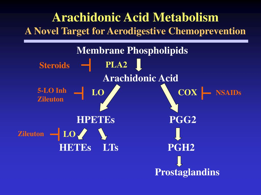 Arachidonic Acid Metabolism