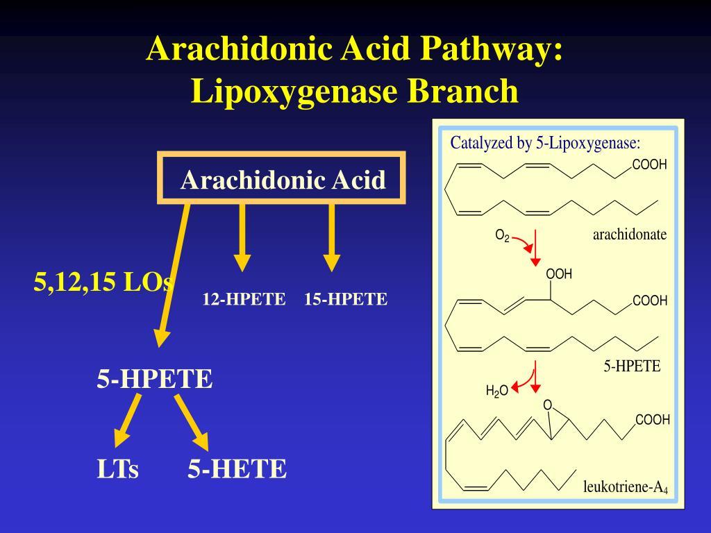 Arachidonic Acid Pathway: