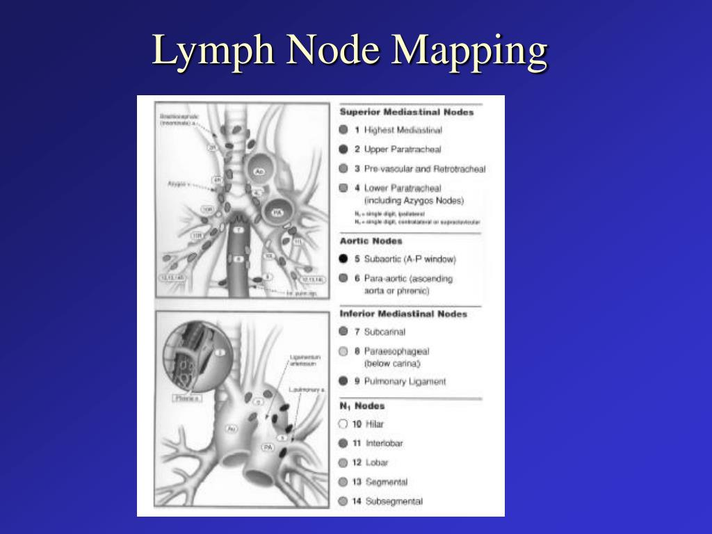 Lymph Node Mapping