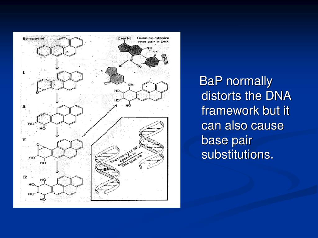BaP normally distorts the DNA framework but it can also cause base pair substitutions.