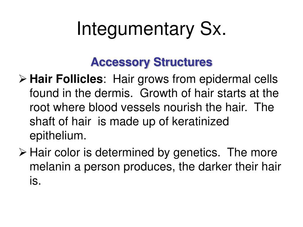 Integumentary Sx.