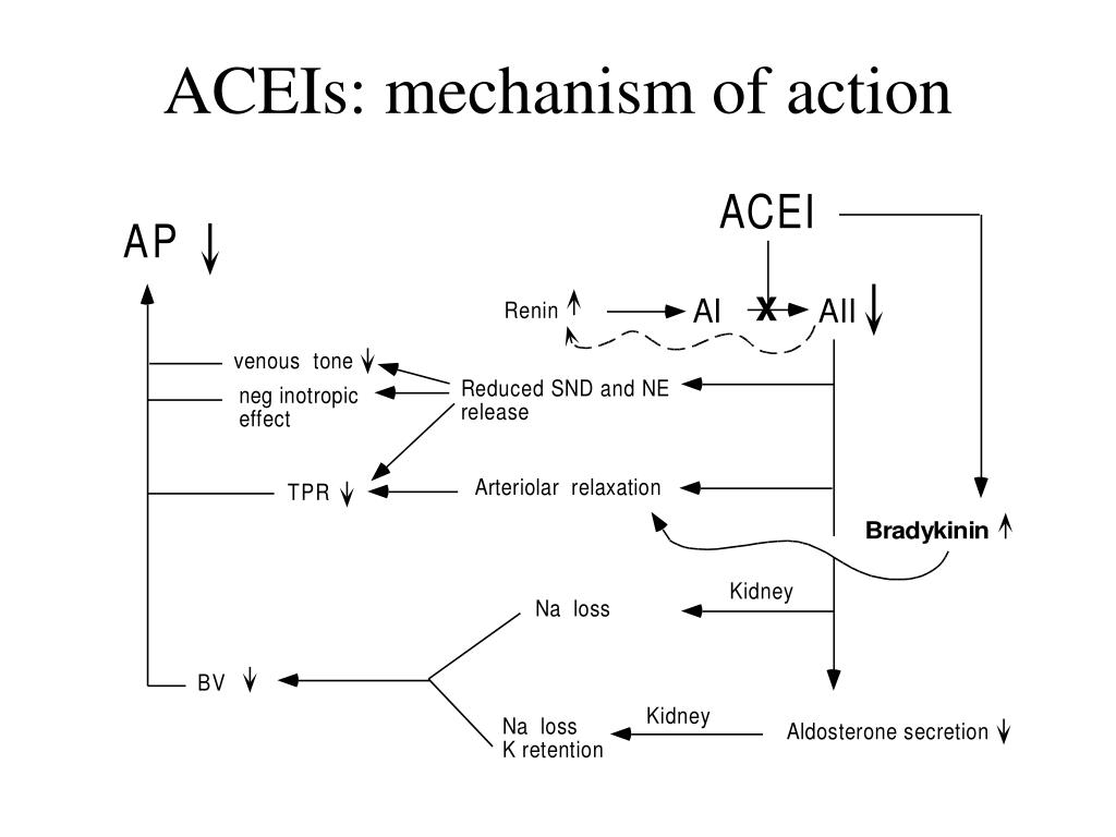 ACEIs: mechanism of action