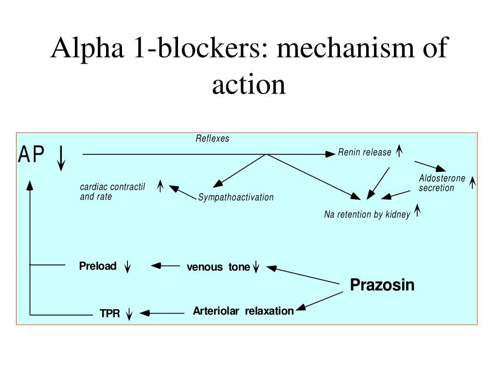 Alpha 1-blockers: mechanism of action