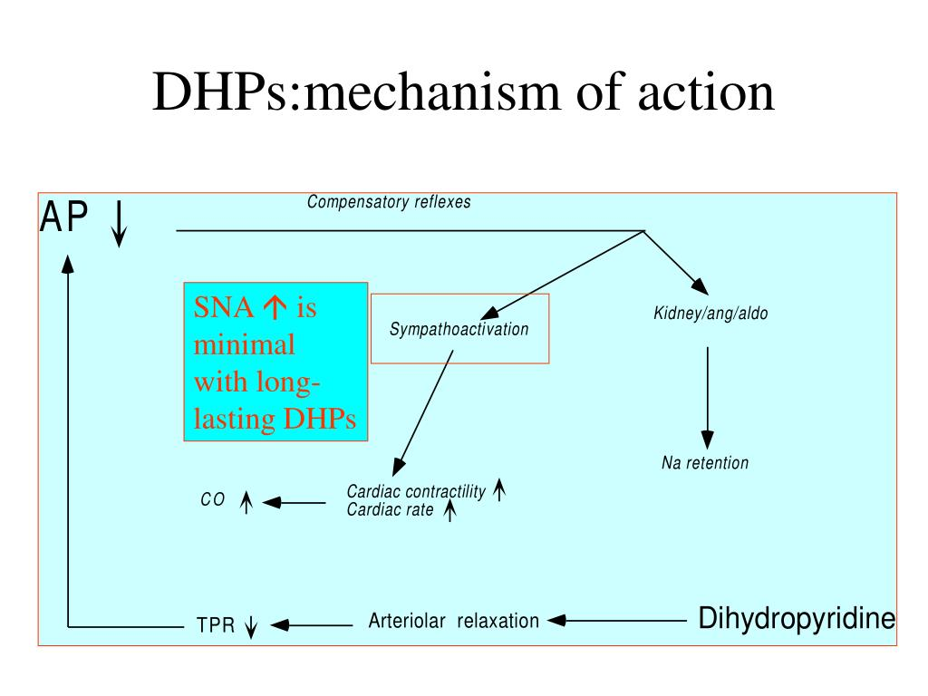 DHPs:mechanism of action