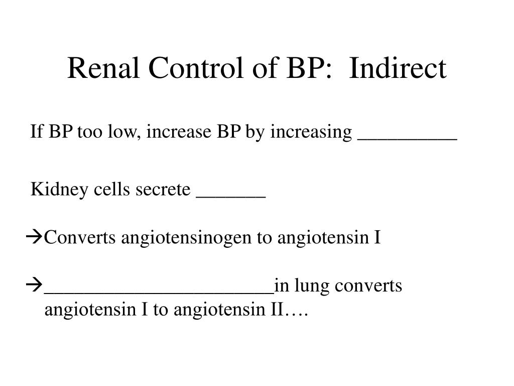 Renal Control of BP:  Indirect