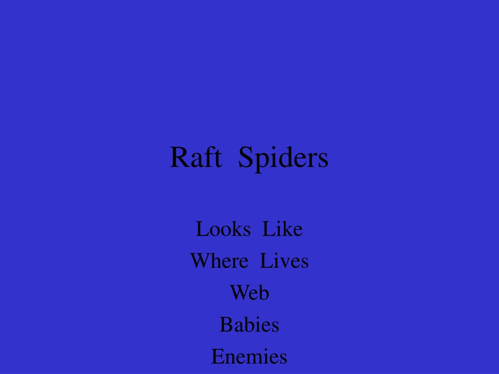 Raft  Spiders