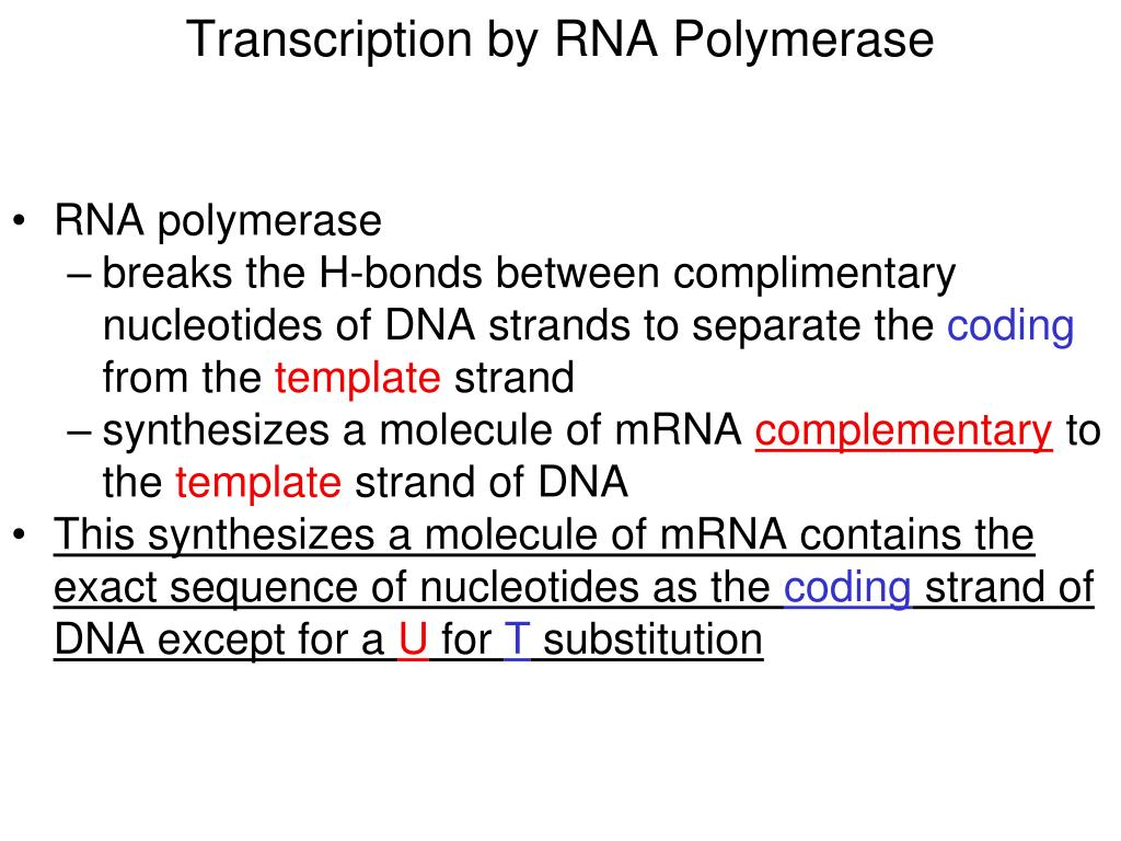 Transcription by RNA Polymerase