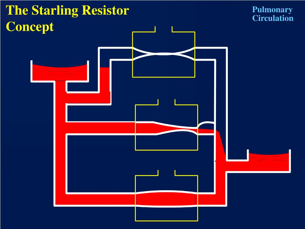 The Starling Resistor Concept