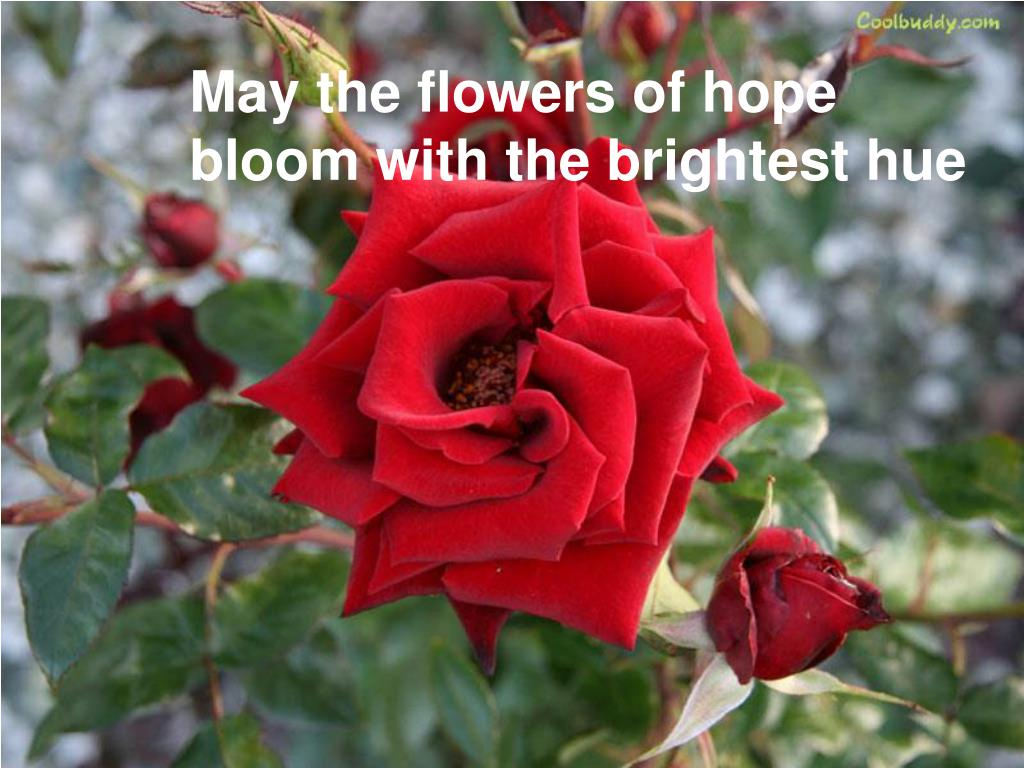 May the flowers of hope bloom with the brightest hue