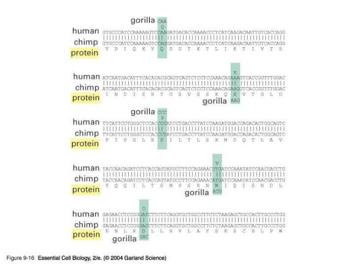 09_16_Ancestral.gene.jpg