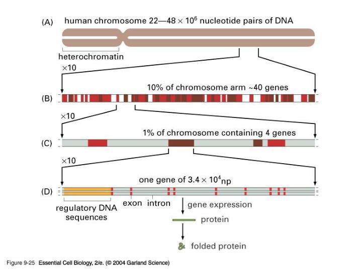 09_25_Chromosome22.jpg