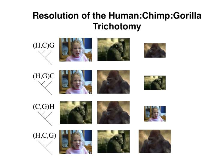 Resolution of the Human:Chimp:Gorilla Trichotomy