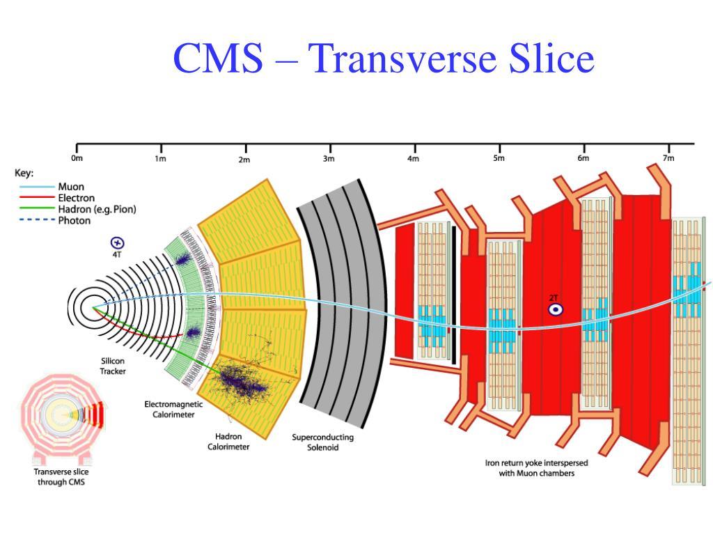 CMS – Transverse Slice