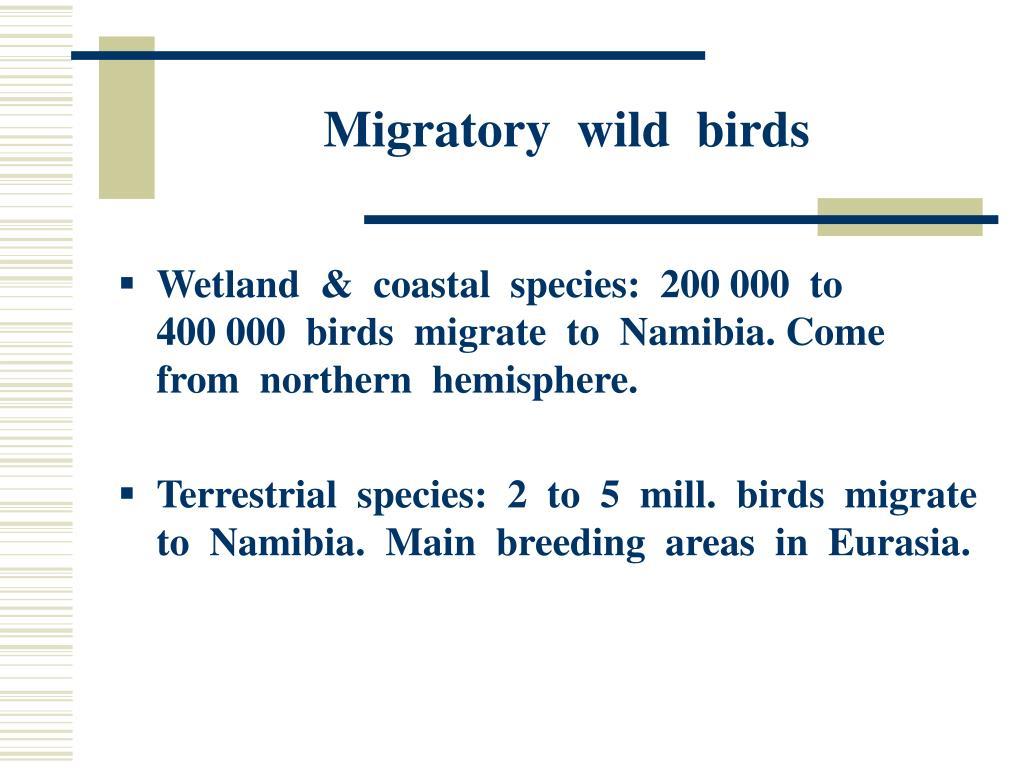 Migratory  wild  birds