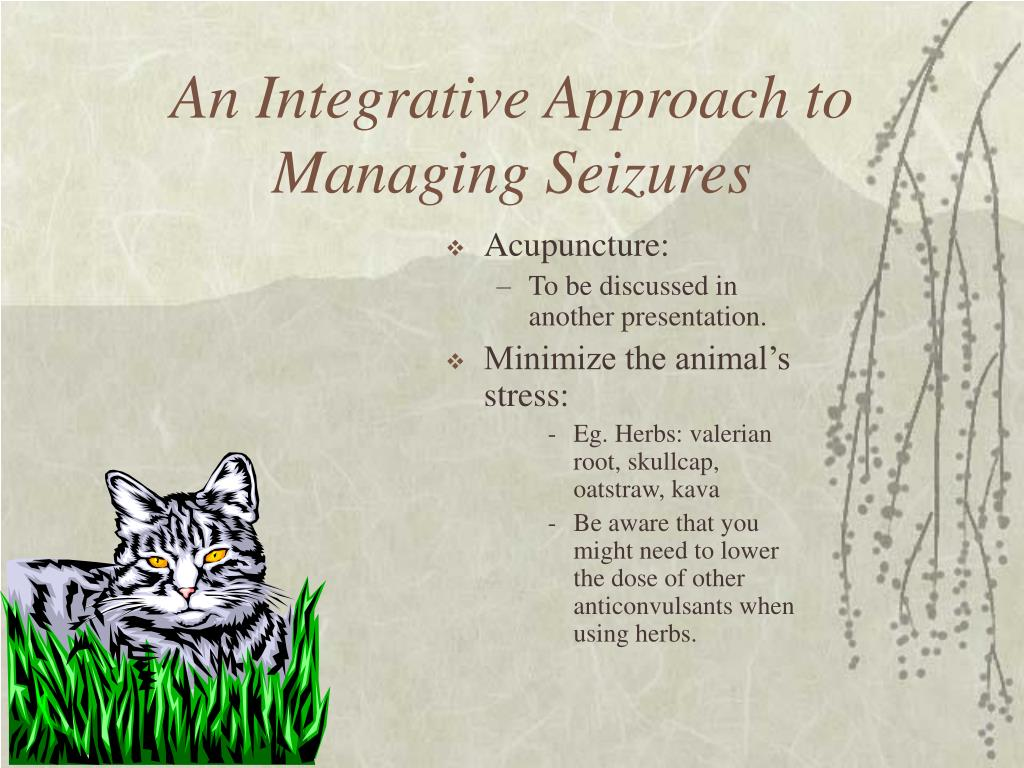 An Integrative Approach to Managing Seizures