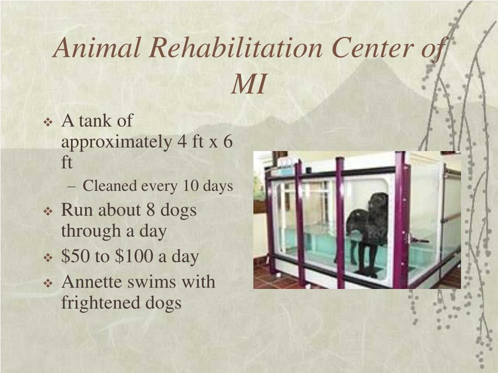 Animal Rehabilitation Center of MI