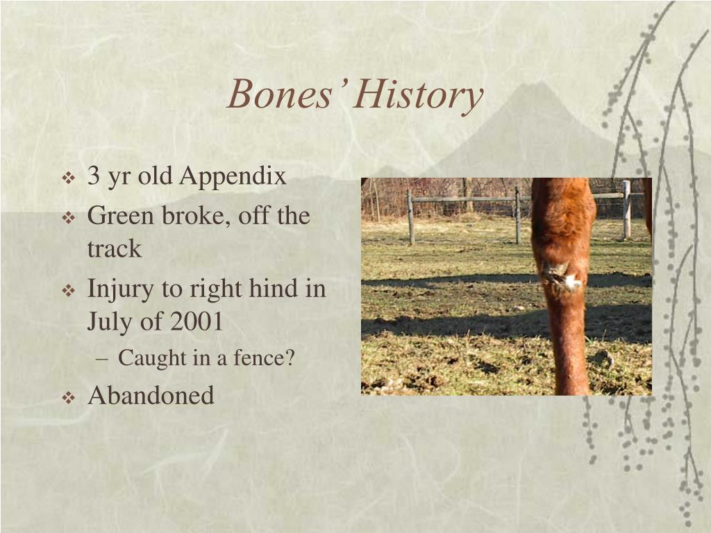 3 yr old Appendix