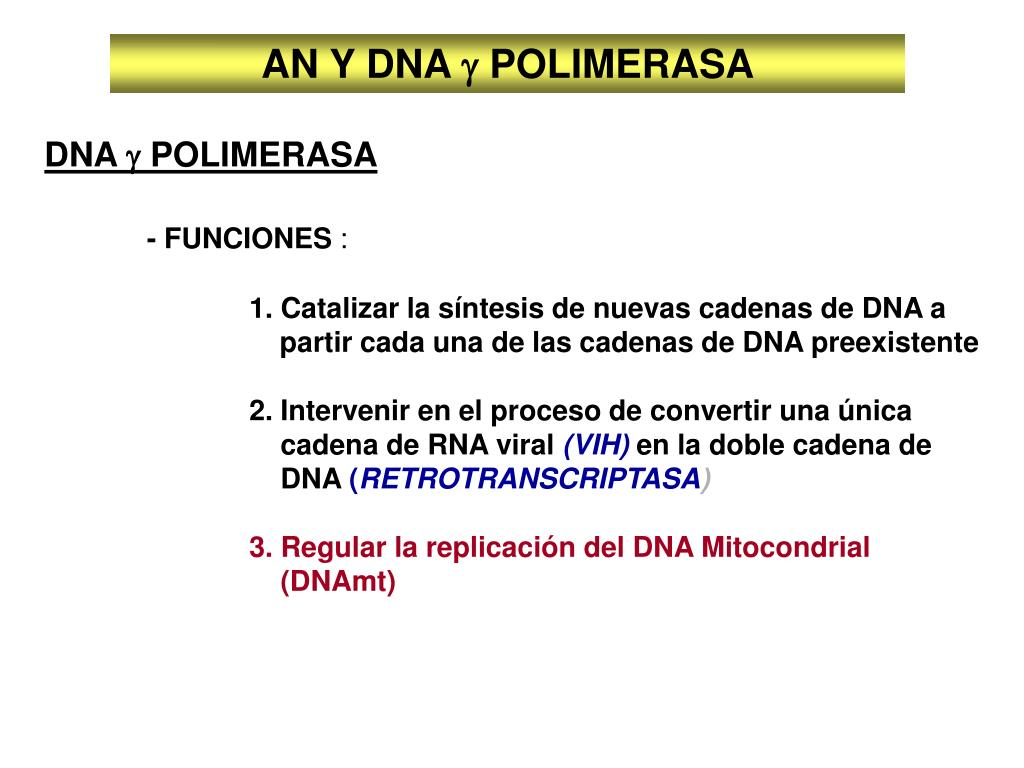 AN Y DNA