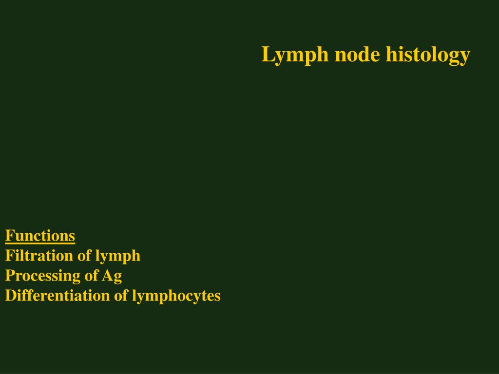 Lymph node histology