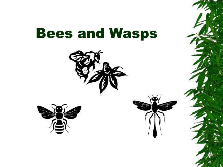 Bees and wasps l.jpg