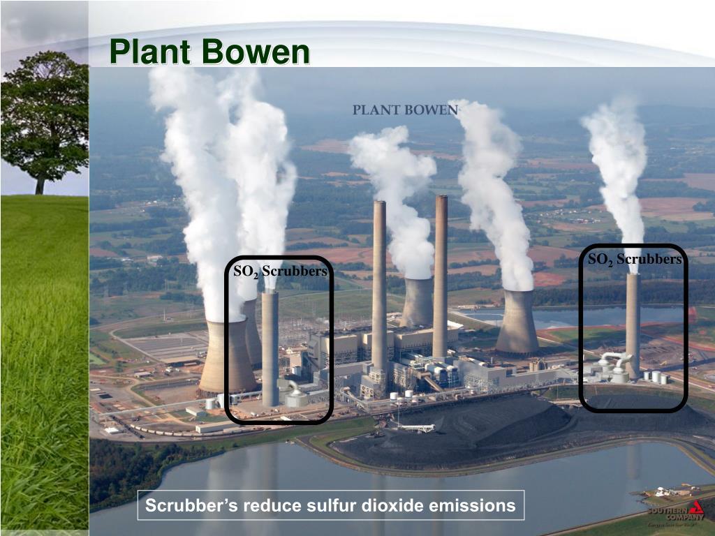 Plant Bowen