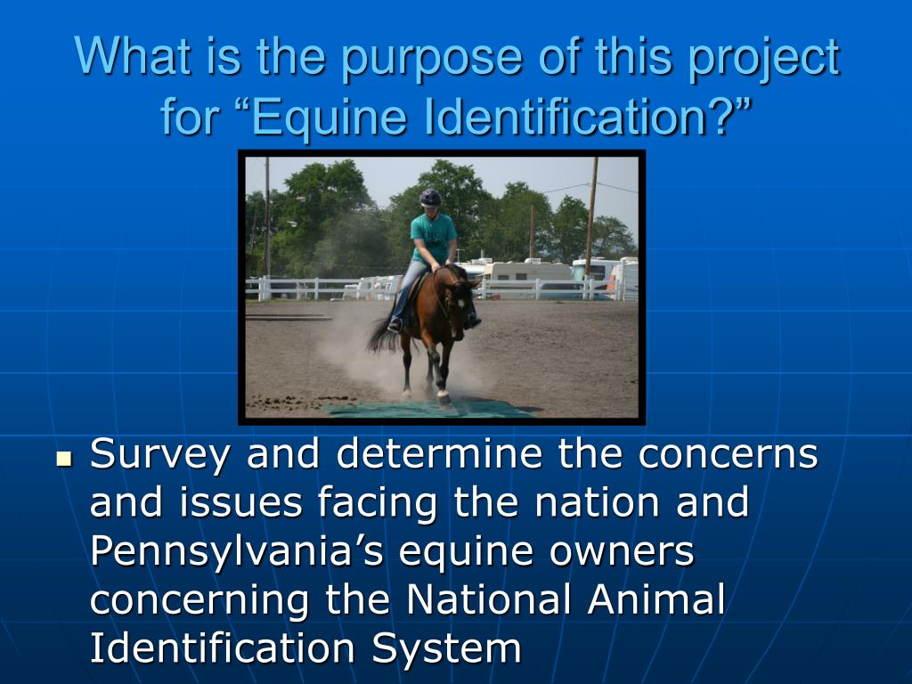"What is the purpose of this project for ""Equine Identification?"""