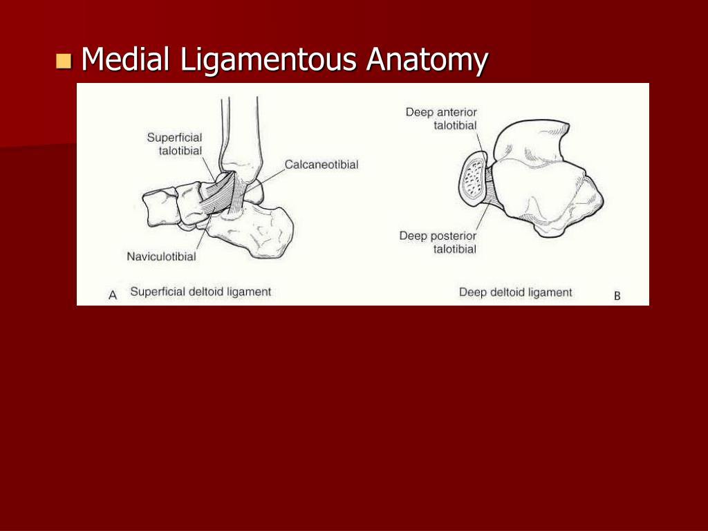 Medial Ligamentous Anatomy