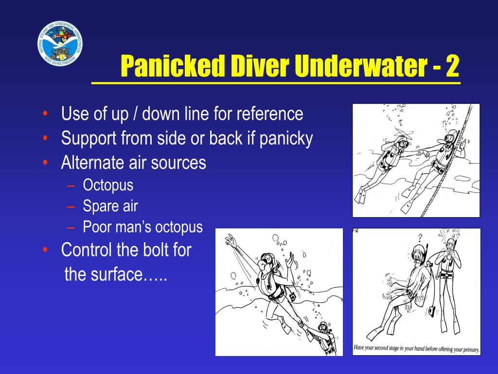 Panicked Diver Underwater - 2