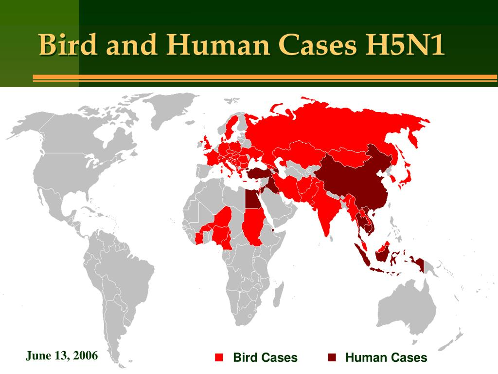 Bird and Human Cases H5N1