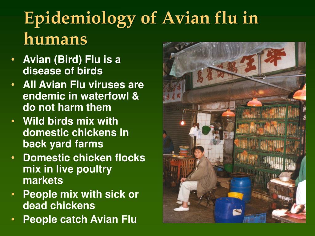 Epidemiology of Avian flu in humans