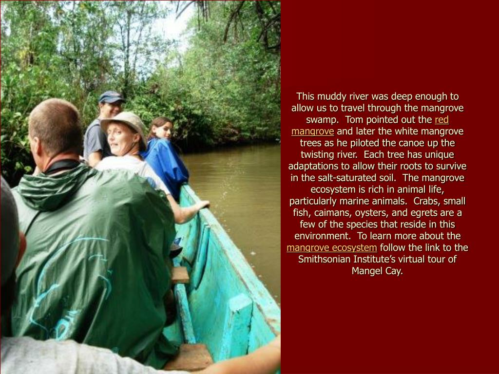 This muddy river was deep enough to allow us to travel through the mangrove swamp.  Tom pointed out the