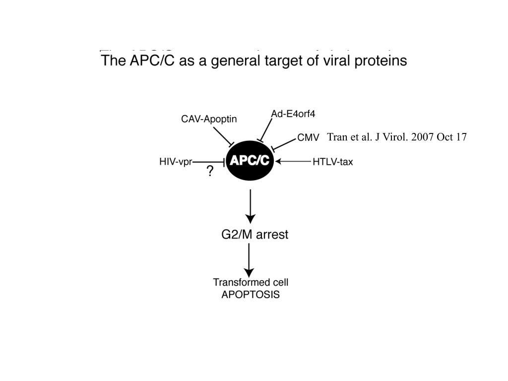 Tran et al. J Virol. 2007 Oct 17