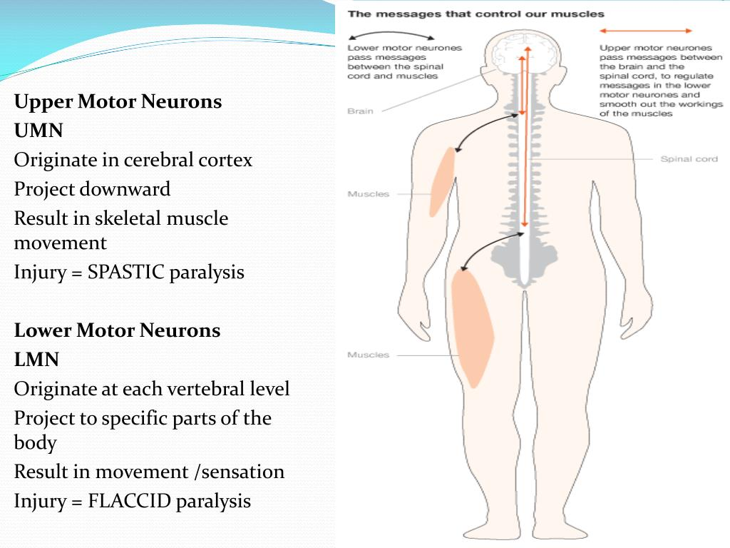 Upper Motor Neurons
