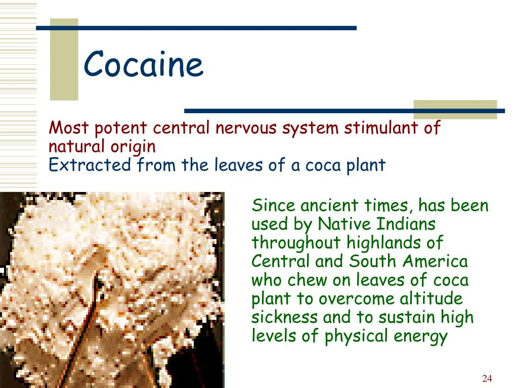 Most potent central nervous system stimulant of natural origin