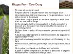 biogas from cow dung