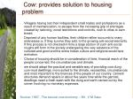 cow provides solution to housing problem