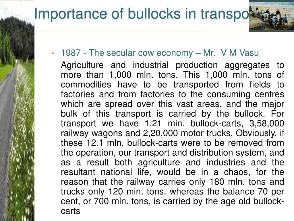 Importance of bullocks in transport