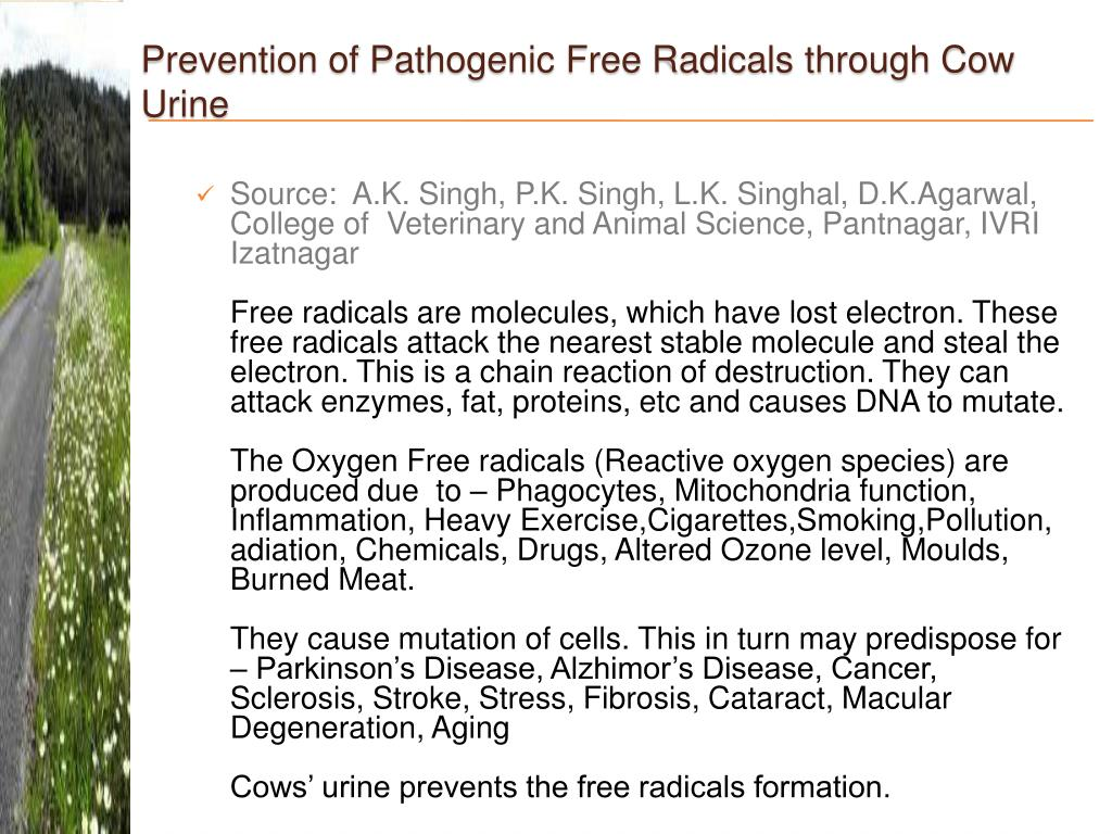 Prevention of Pathogenic Free Radicals through Cow Urine